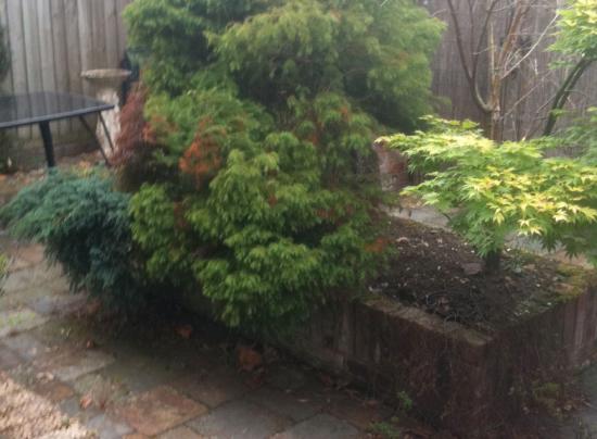 Horseguards1 garden design devon before 1 plant a seed for Garden design devon